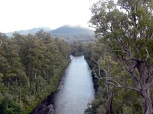 Дождевой лес Тасмании